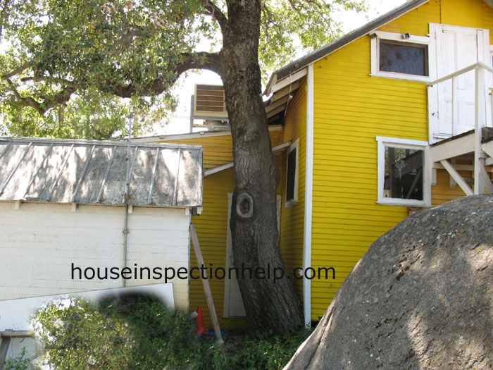 Large Tree Next To House