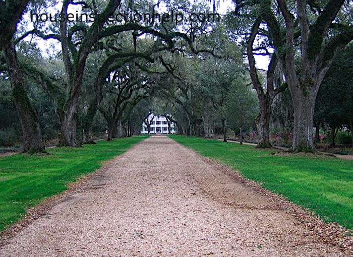 Long Driveway With Trees