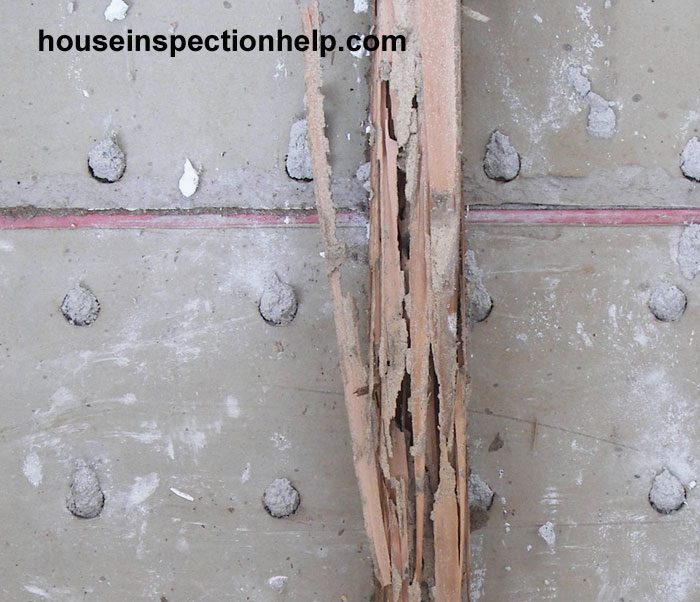 Wall Stud Termite Damage