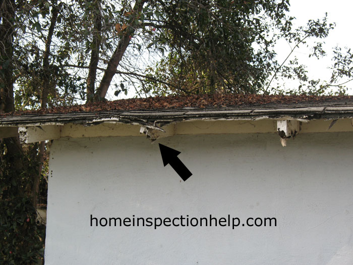 Damaged Roof From Termites