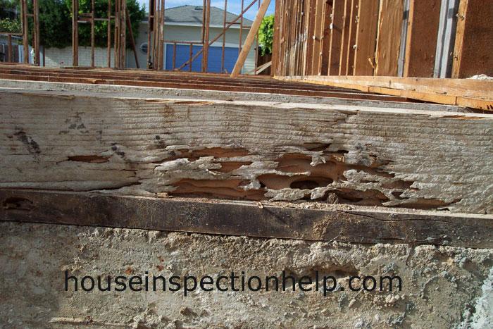 Floor Rim Termite Damage