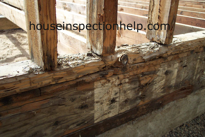 Wall And Floor Termite Damage